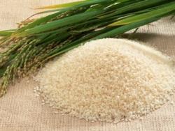 گیاهان دارویی      برنج